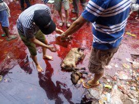 जनकपुरको राजदेवी मन्दिरमा करीब १५ हजार बोकाको बली चढाए  